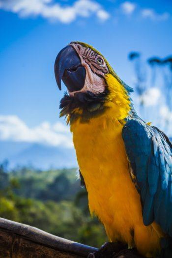 Top 5 destinos no Brasil 5
